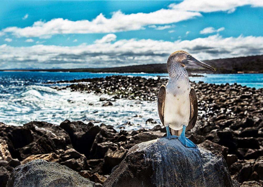 Galapagos Photo Safari
