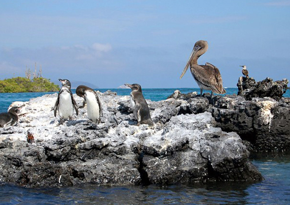 Isabela Galapagos Island - Enjoy Diving & Watch Whale Species