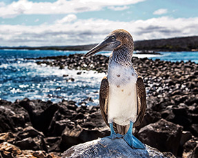 Galapagos Wildlife & Photo Expedition