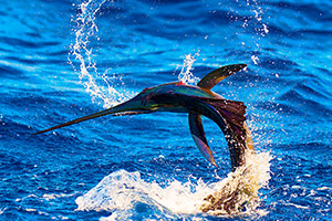 fish-florida-1