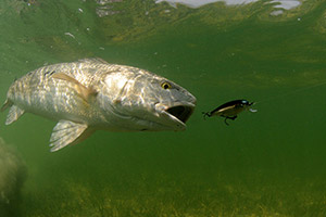 fish-florida-5