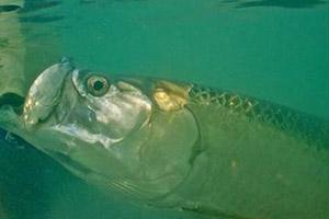 fish-florida-6
