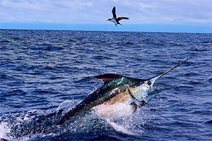 fish-panama