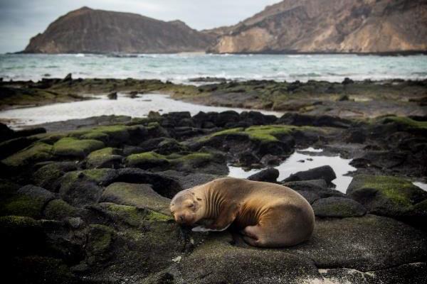 Galapagos Photo Safari Adventure