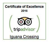 Isabela Iguana Crossing