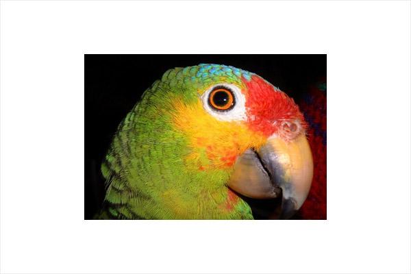 Birdwatching in Abaco Islands