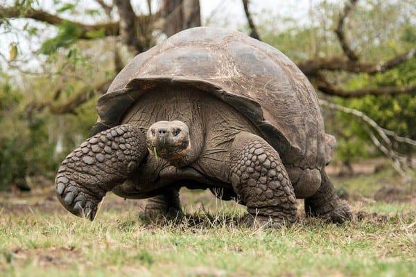Galapagos Island Photo Safari Adventure