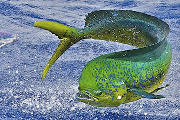 green-turtle-fish-fishing-regulations