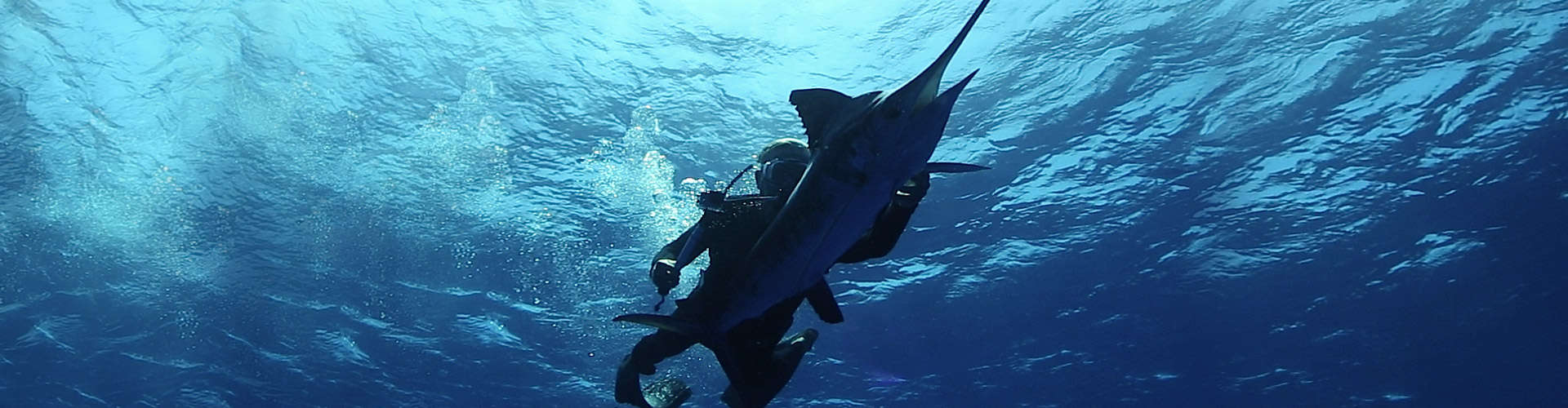 Isla Mujeres Fishing Charters, Blue Marlin Fishing trips Mexico