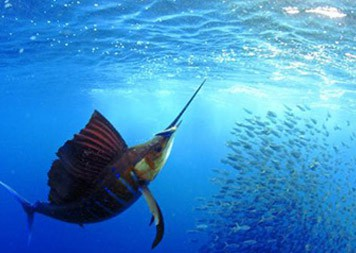 isla-mujeres-fish-expedition-outfitter