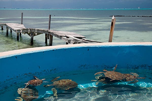 isla-mujeres-play-turtle-farm2