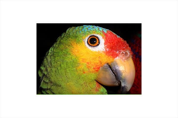 west-end-discover-birding