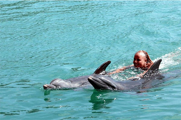 west-end-discover-swim-with-dolphins