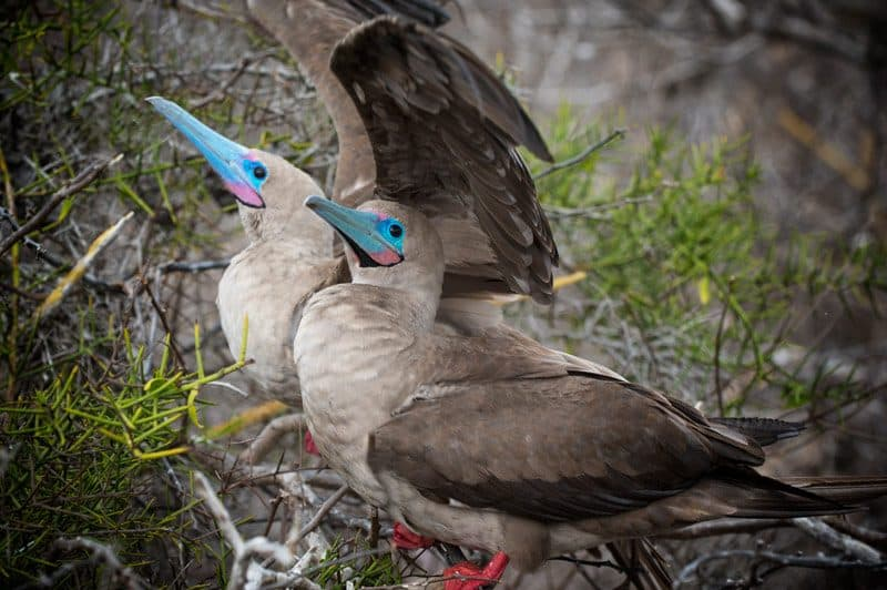 galapagos-safari-adventure-large12