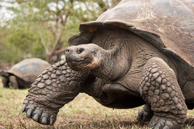 galapagos-safari-adventure-large15
