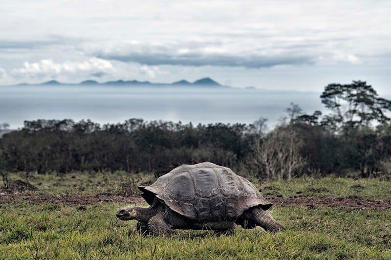 galapagos-safari-adventure-large16