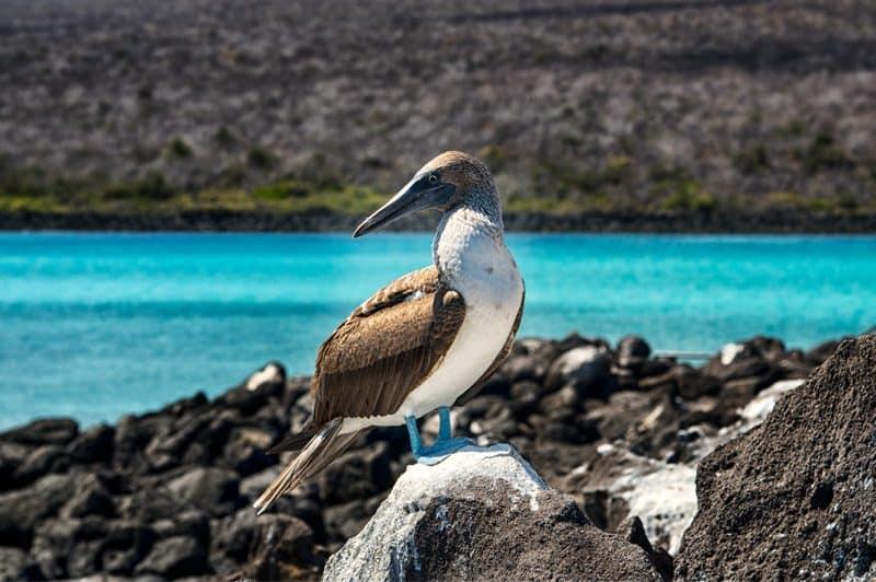 galapagos-safari-adventure-large2