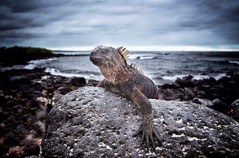 galapagos-safari-adventure-large27