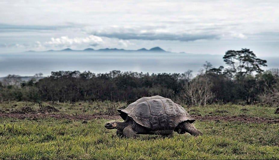 galapagos-safari-adventure-large30