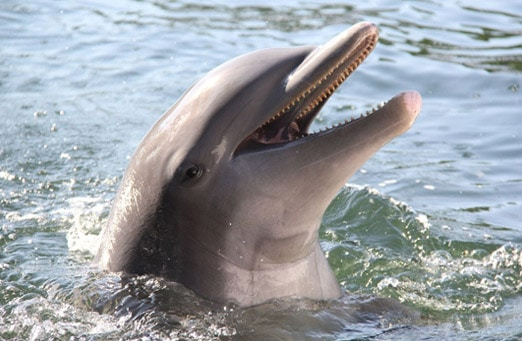 03-Swim-with-the-Dolphin-at-Theater-Of
