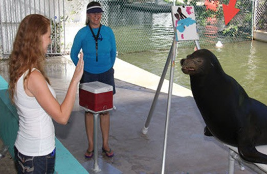 08-Meet-the-Sea-Lion-at-Theater-Of-the-Sea!
