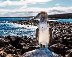 Galapagos Photo & Wildlife Expedition