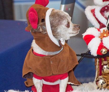 Santa Paws Holidog Pawty